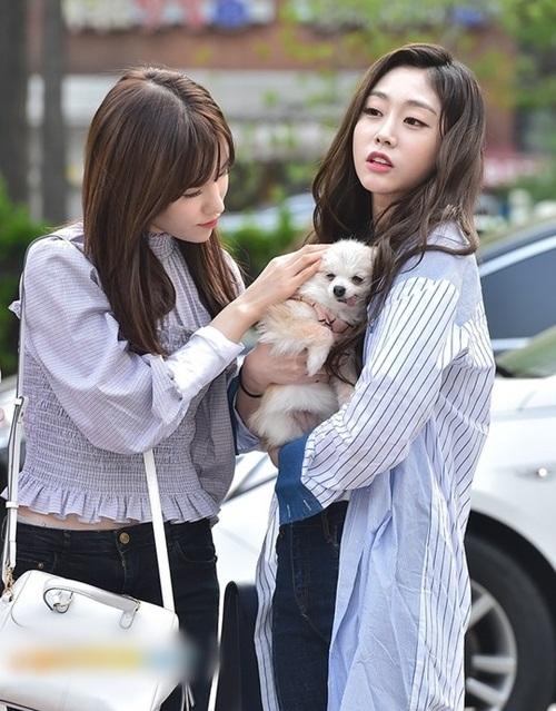 Các thành viên Lovelyz còn mang cả cún cưng đến đài truyền hình.