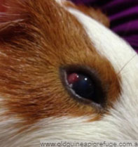 Chỉ nhìn qua mắt, đố bạn đâu là con thỏ? - 1