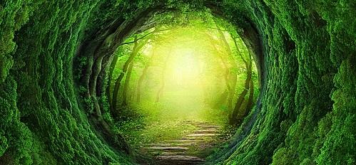 Xứ sở thần tiên - bài trắc nghiệm phơi bày thế giới nội tâm của bạn - 7