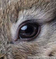 Chỉ nhìn qua mắt, đố bạn đâu là con thỏ? - 7