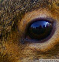 Chỉ nhìn qua mắt, đố bạn đâu là con thỏ? - 8