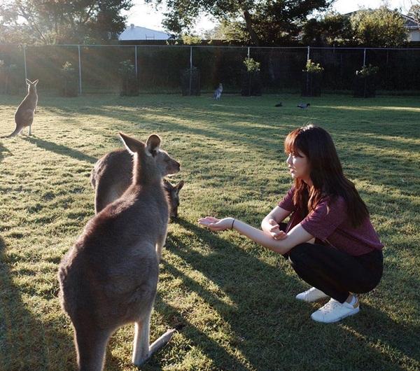 Kim So Hyun thích thú cho kangaroo ăn. Cô nàng có vóc dáng chẳng lớn hơn kangaroo là bao.
