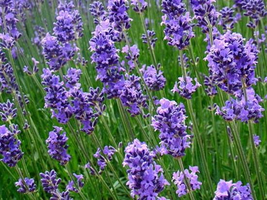 Biết những loài hoa này tên gì bạn quả là thiên tài (3)