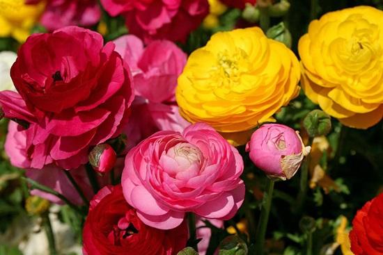Biết những loài hoa này tên gì bạn quả là thiên tài (3) - 3
