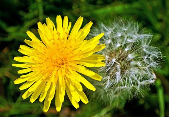 Biết những loài hoa này tên gì bạn quả là thiên tài (3) - 4
