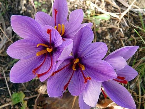 Biết những loài hoa này tên gì bạn quả là thiên tài (3) - 7