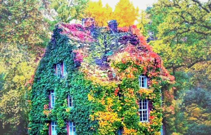 """<p> Green House (Giessen, Đức) có dàn dây leo """"hoành tráng"""" bao phủ từ mái nhà đến mặt đất.</p>"""