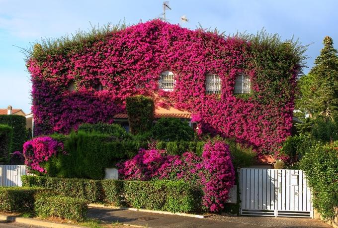 <p> Còn đây là ngôi nhà hoa giấy ở Rome, Italy.</p>