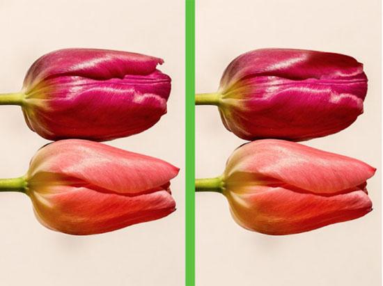Vừa ngắm hoa đẹp vừa soi điểm khác biệt