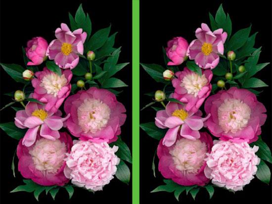 Vừa ngắm hoa đẹp vừa soi điểm khác biệt - 1
