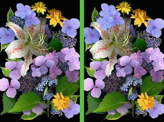 Vừa ngắm hoa đẹp vừa soi điểm khác biệt - 2