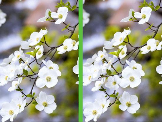 Vừa ngắm hoa đẹp vừa soi điểm khác biệt - 3