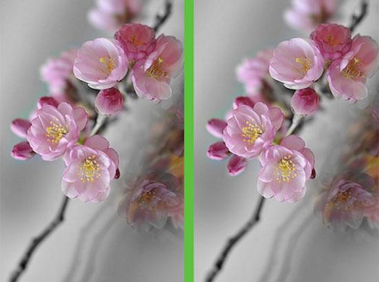 Vừa ngắm hoa đẹp vừa soi điểm khác biệt - 4