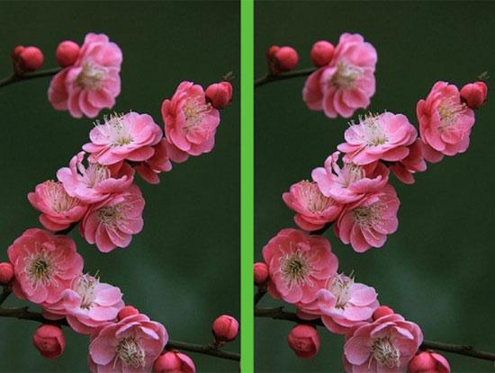 Vừa ngắm hoa đẹp vừa soi điểm khác biệt - 5