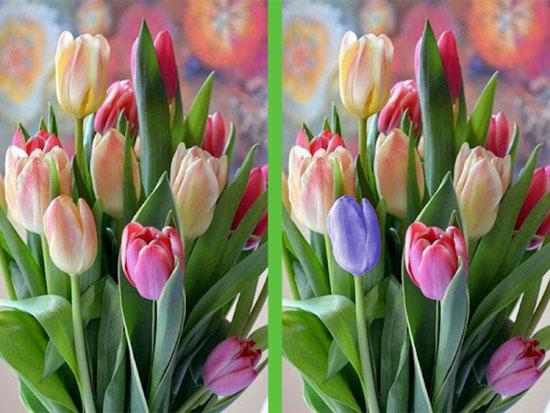 Vừa ngắm hoa đẹp vừa soi điểm khác biệt - 6