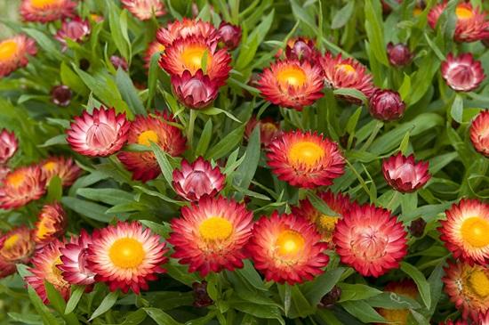 Ý nghĩa của các loài hoa, bạn có biết? (2)