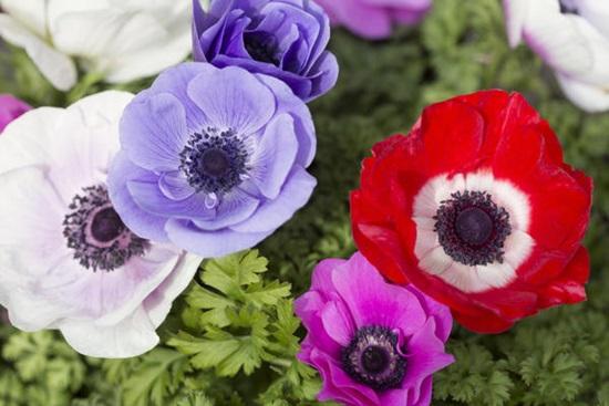 Ý nghĩa của các loài hoa, bạn có biết? (2) - 2