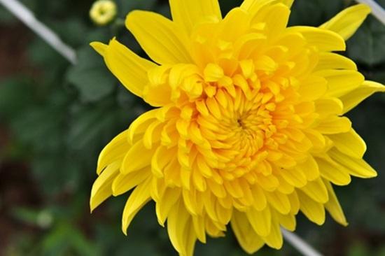 Ý nghĩa của các loài hoa, bạn có biết? (2) - 3