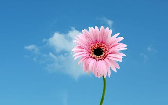 Ý nghĩa của các loài hoa, bạn có biết? (2) - 4