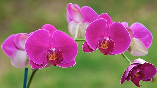 Ý nghĩa của các loài hoa, bạn có biết? (2) - 5
