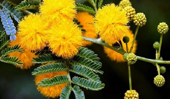 Ý nghĩa của các loài hoa, bạn có biết? (2) - 7