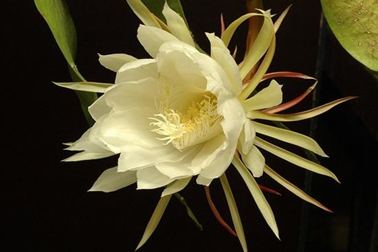 Ý nghĩa của các loài hoa, bạn có biết? (2) - 8