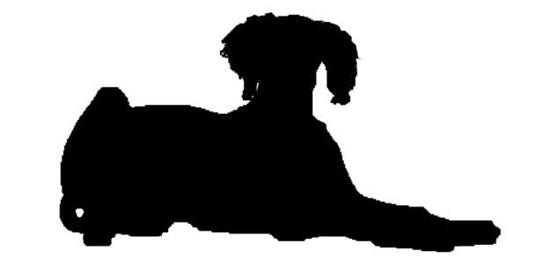 Nhìn bóng cún cưng đoán giống loài - 9