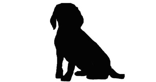 Nhìn bóng cún cưng đoán giống loài - 1