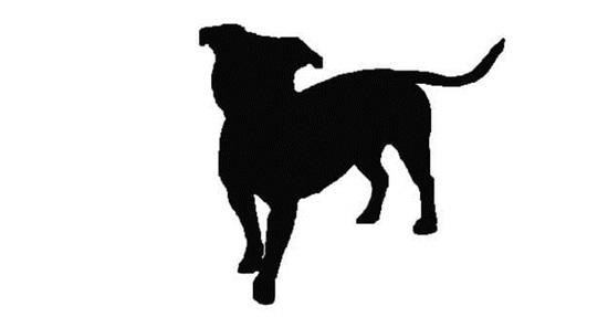 Nhìn bóng cún cưng đoán giống loài - 6