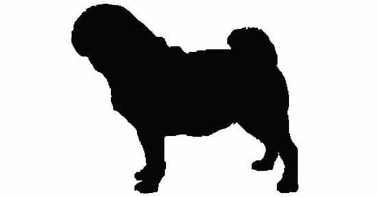 Nhìn bóng cún cưng đoán giống loài - 7