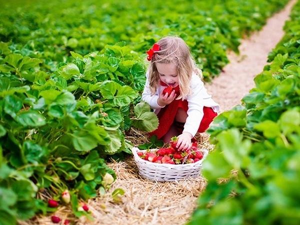 Khu vườn dâu tây - bài trắc nghiệm phơi bày ham muốn và chỉ số chống lại cám dỗ của bạn - 3