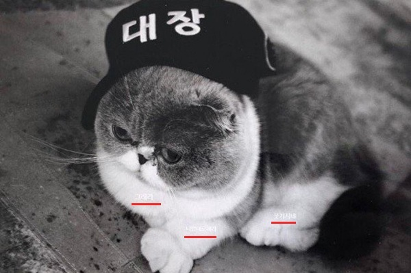 Bức ảnh con mèo đội mũ ông chủ với những lời nhắn hàm ý mỉa mai.