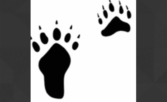 Bạn có thể xác định con vật qua dấu chân? - 9