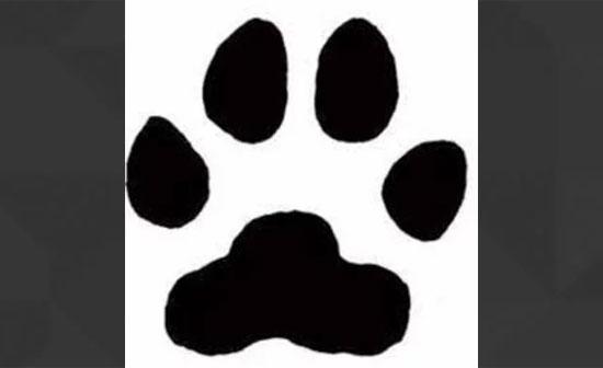 Bạn có thể xác định con vật qua dấu chân? - 1