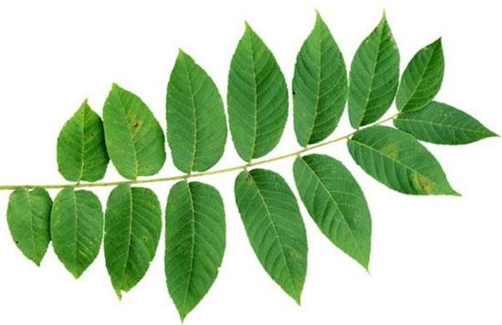 Đây là cây gì? - 6