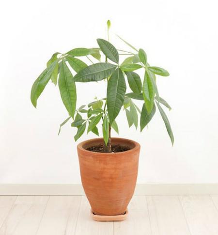 80% người không biết đây là cây gì? - 4
