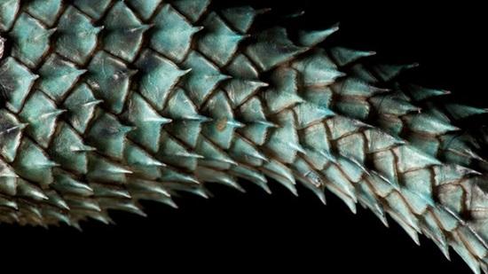 Đoán con vật từ hình ảnh phóng đại - 9