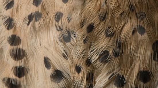 Đoán con vật từ hình ảnh phóng đại - 4
