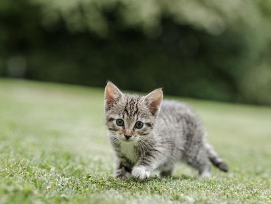 Bạn biết gì về loài mèo? - 3