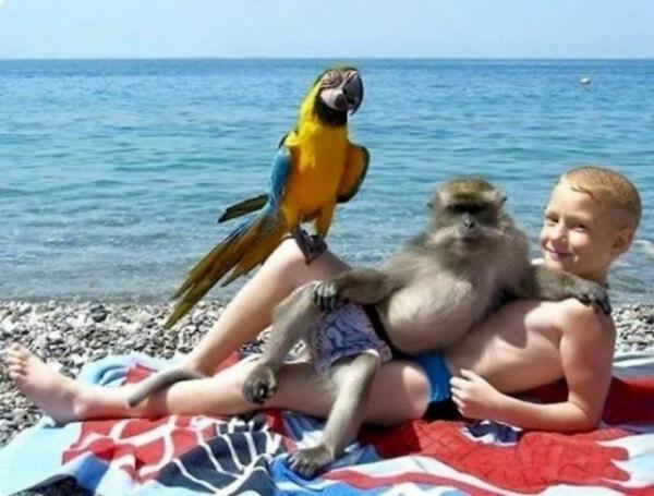 Khi một chú khỉ gợi cảm trở thành trung tâm của bức ảnh.