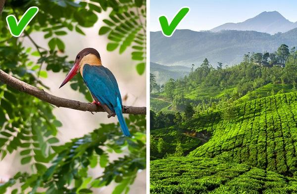 Trước khi du lịch Ấn Độ, nhất định bạn phải biết những điều này - 1