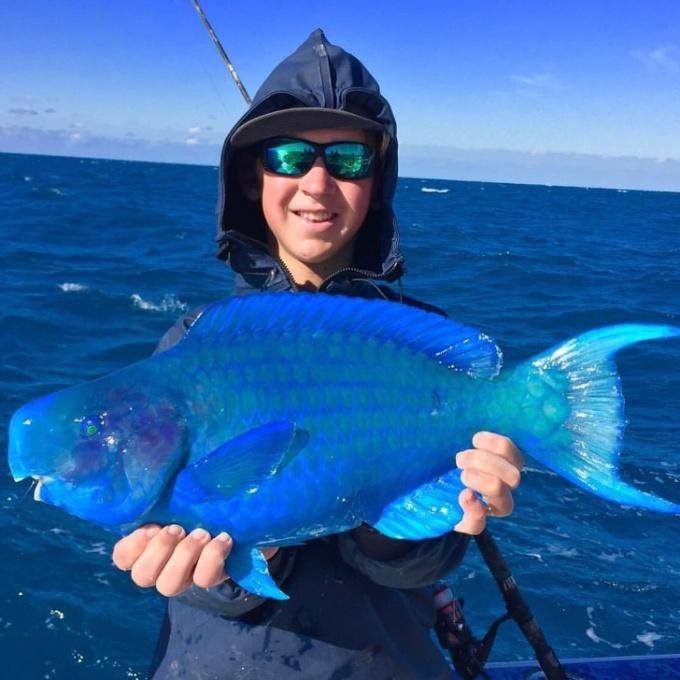 <p> Màu xanh của con cá vẹt này trông thật khó tin!</p>