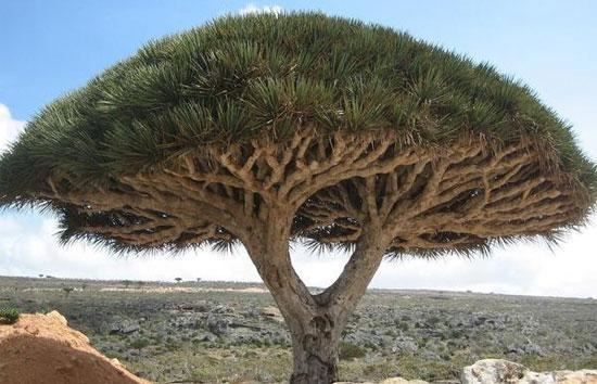 Đây là cây gì? - 9