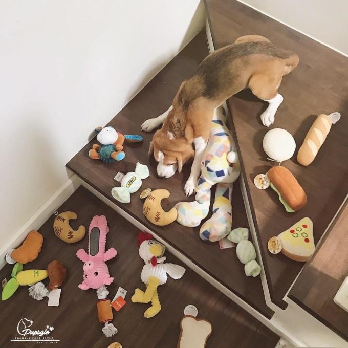 <p> Sự ăn ý điểm 10 của chủ nhân hài hước với chú chó để có bức ảnh như ý.</p>