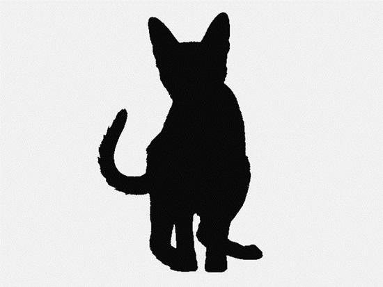Nhìn bóng mèo cưng đoán giống loài