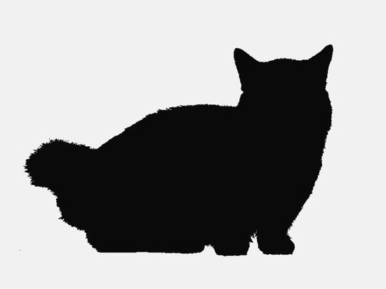 Nhìn bóng mèo cưng đoán giống loài - 9