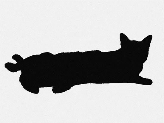 Nhìn bóng mèo cưng đoán giống loài (2) - 1