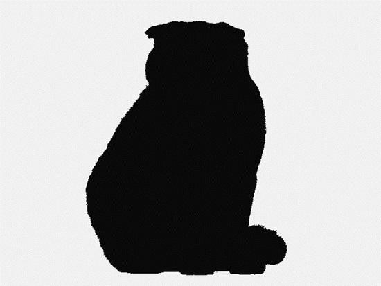 Nhìn bóng mèo cưng đoán giống loài (2) - 5