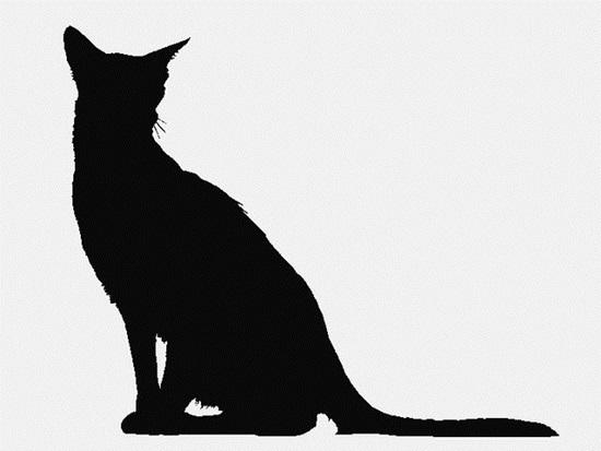 Nhìn bóng mèo cưng đoán giống loài - 1
