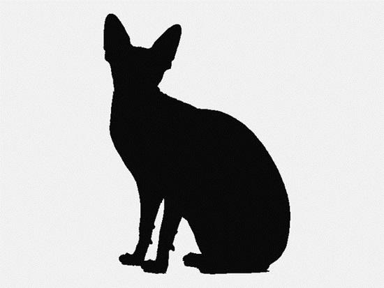 Nhìn bóng mèo cưng đoán giống loài (2) - 8